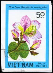 VIETNAM - CIRCA 1984 Bauhinia
