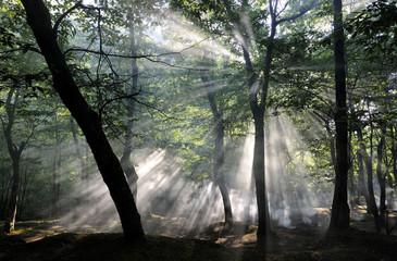 Alba con raggi al bosco