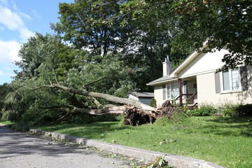 Private house, fallen tree after a heavy summer storm