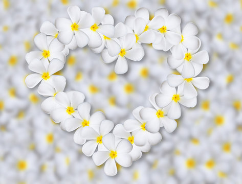 Plumeria flowers heart on flower background