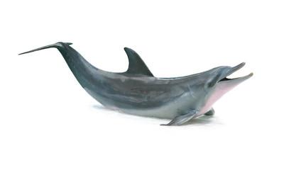 Photo sur Aluminium Dauphins Dolphin isolated on white background