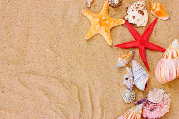 beautiful shells and starfish on sand