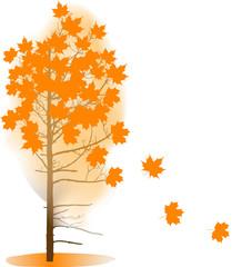 autumn maple tree isolated on white