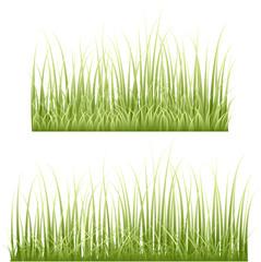 Set Of Dry Grasses