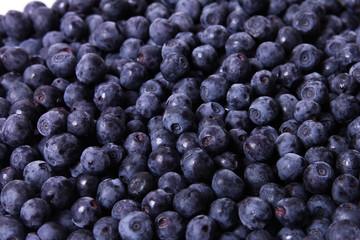 bilberry fruit