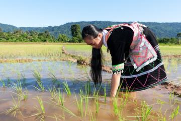 Arbeit am Reisfeld