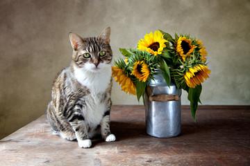 Katze und Sonnenblumen