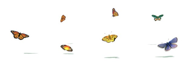 Butterflies and rainbow