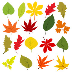Collection of different autumn leaves isolated on white