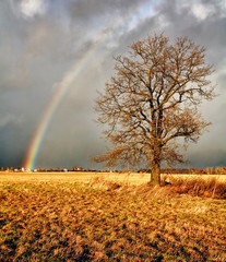 Rainbow over а field.