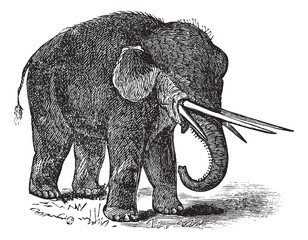 American mastodon or Mammut americanum vintage engraving
