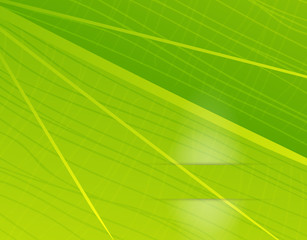 Vector green leaf texture