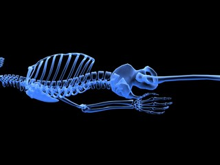 A bones X-ray perspective picture.