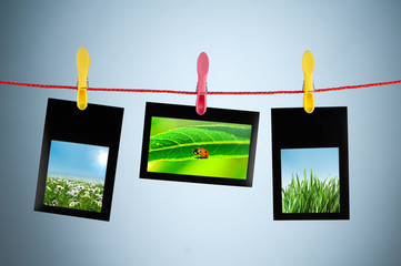Nature photos in picture frames