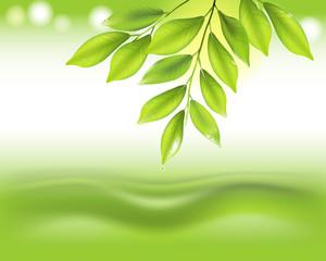 leaf, leaves, drop, water