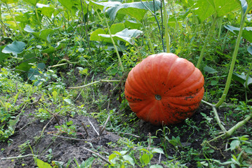 Gourd Plant Vegetable Pumpkin