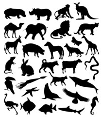 Collection of silhouettes of animals from all continents