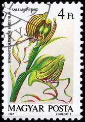 HUNGARY - CIRCA 1987 Himantoglossum