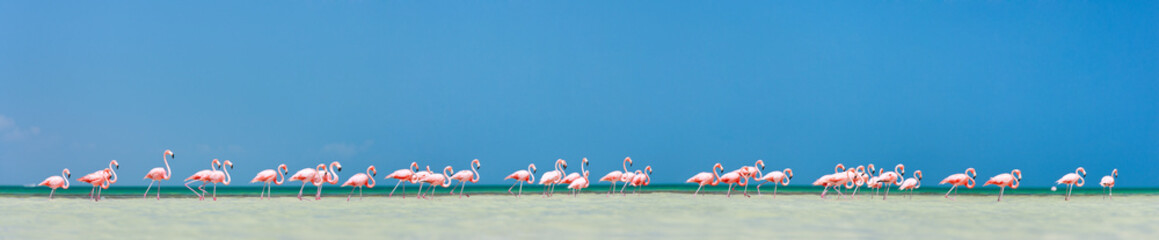 Poster Flamingo Pink flamingos panorama