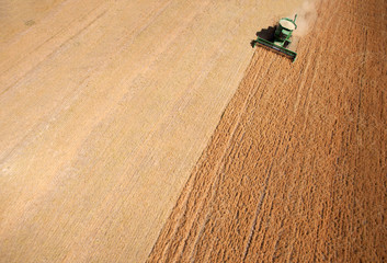 Harvest Background Abstract