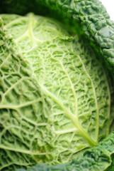 Cabbage leaf texture