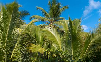 Garden Palms Leaves