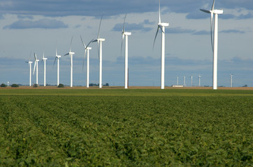 Renewable energy generators using wind power on a field