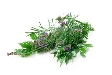 oregano, parsley, chervil, rosemary, thym on white background
