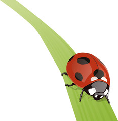 COCCINELLE_FEUILLE