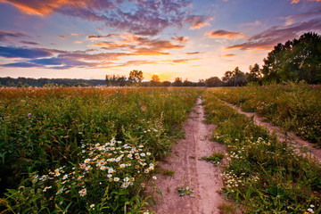 Autumn field with daisies at sunset
