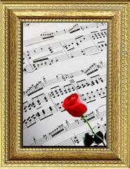 Spartito musicale con rosa rossa incorniciato