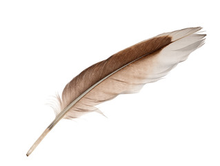 white and brown goose feather