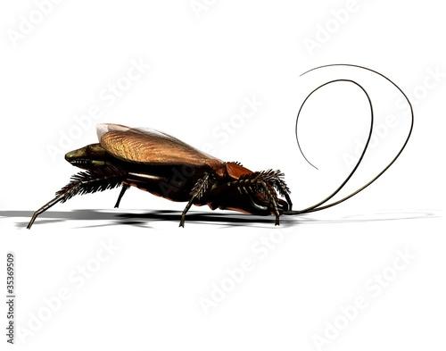 Gemeine Kakerlake Kuchenschabe In Nahaufnahme Stockfotos Und