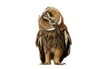 Poster de jardin Chouette owl isolated on white background