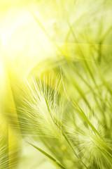 Grass  steppe  autumn  sunlight