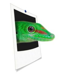 Gros sur l'oeil d'un Gecko.