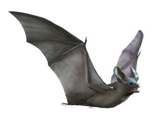 Bat Flying on White