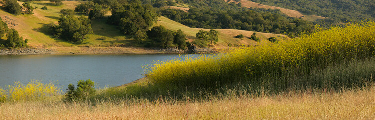 Panorama of mustard field and oak grassland in California