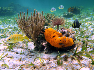 Underwater sea life with orange sea sponge, sea rod coral, tropical fish and a feather duster worm in the Caribbean sea
