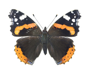 Red admiral, Vanessa atalanta isolated on white background