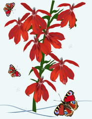red butterflies and orchids illustration