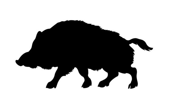 silhouette of the wild  boar isolated on white background