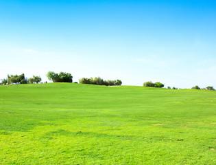 Grass Fields Of Green
