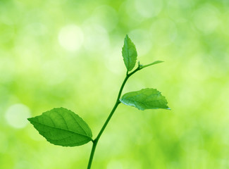 Green leaves with natural