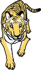 トラ tigris