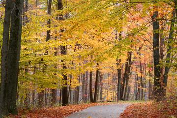 Bike path through autumn trees