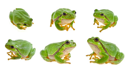 Tuinposter Kikker tree frog isolated on white background