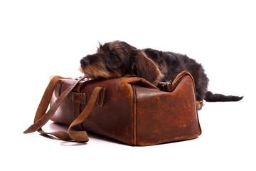Wall Mural - schlafender Hund Dackel auf Tierarzt Koffer