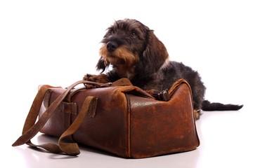 Wall Mural - junger Hund Dackel mit Tierarztkoffer