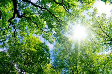 Summer Hight Forest Landscape